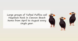 Cannon Beahc Puffins